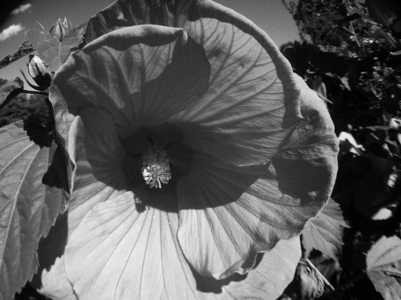Flower in black and white thirdeyemom