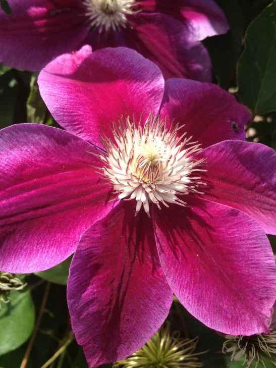 Minnesota flower