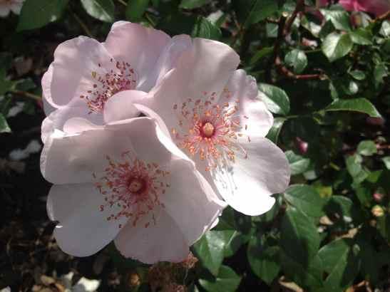 Minnesota Summer Flower
